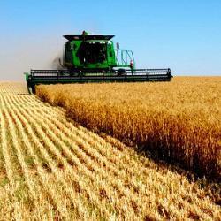 agronegocio colheitadeira